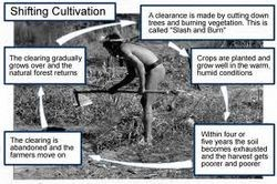 250px-Shifting_cultivation_pic (2)