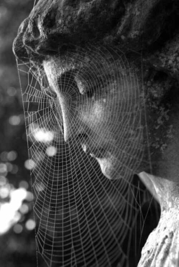 caughtinspiderweb